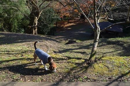 20161202佐倉城址公園09