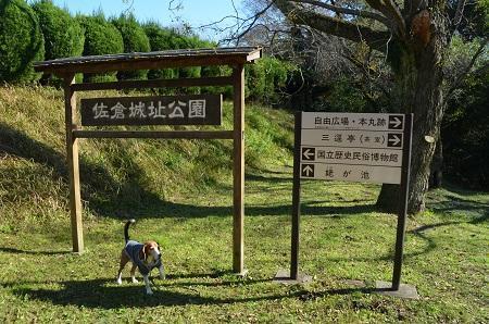 20161202佐倉城址公園08