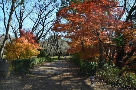 20161202佐倉城址公園18