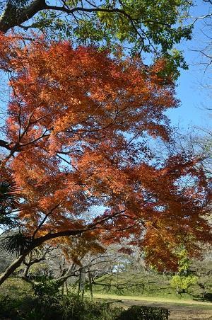 20161202佐倉城址公園16