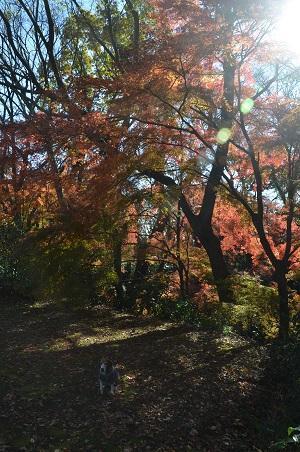 20161202佐倉城址公園15