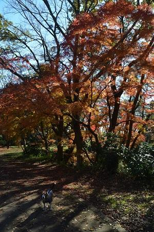 20161202佐倉城址公園14