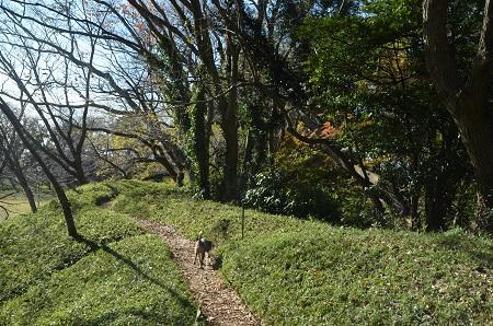 20161202佐倉城址公園21