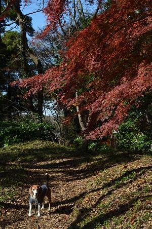 20161202佐倉城址公園20