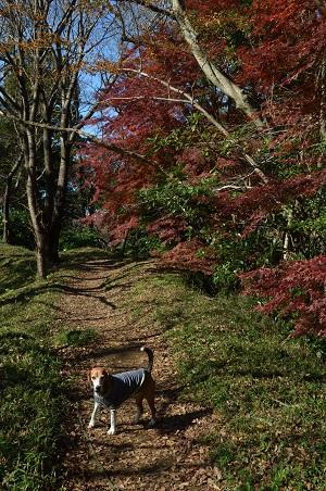 20161202佐倉城址公園19