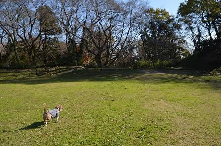 20161202佐倉城址公園36