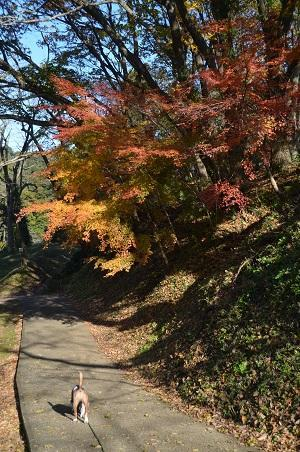 20161202佐倉城址公園42