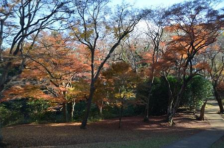20161202佐倉城址公園44