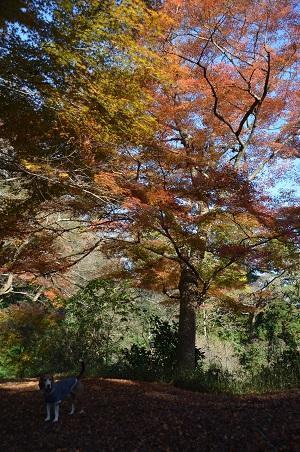 20161202佐倉城址公園43
