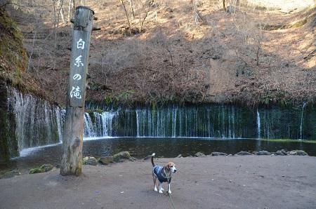 20161206白糸の滝08