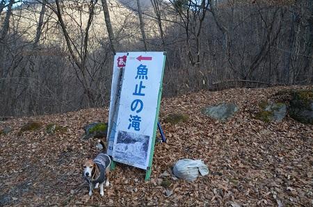 20161206魚止ノ滝01