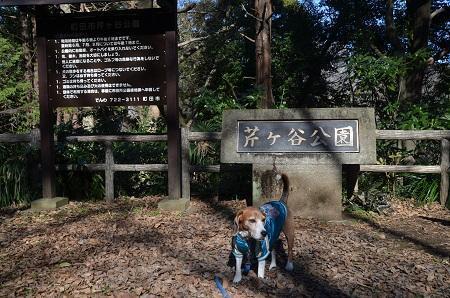 20170101芹ヶ谷公園02