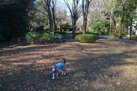 20170101芹ヶ谷公園11
