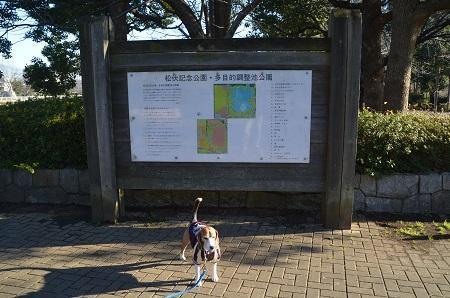 20170111松伏記念公園01