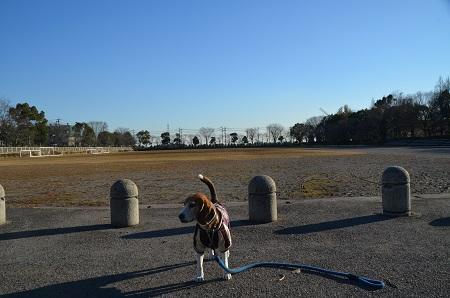 20170111松伏記念公園27