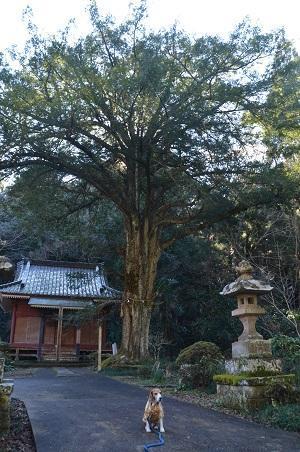 20170121法興寺 大黒天15