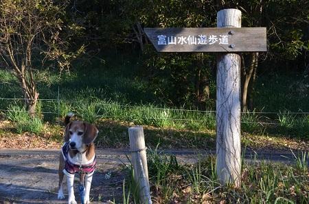 20170126富山水仙遊歩道08