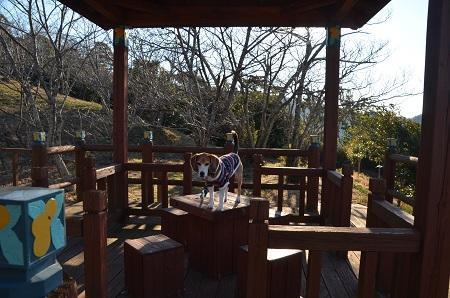 20170126富山水仙遊歩道24