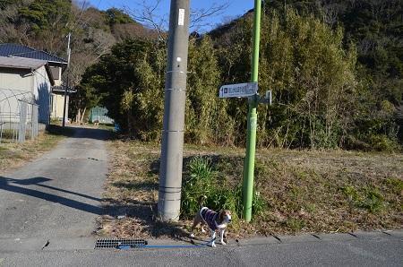20170126富山水仙遊歩道35