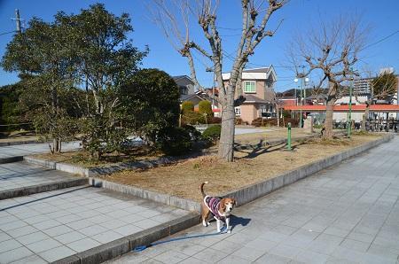 20170126伏姫公園0104