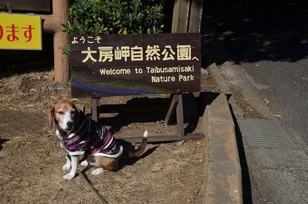 20170126大房岬自然公園01