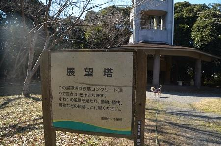 20170126大房岬自然公園09