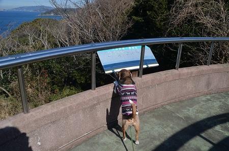 20170126大房岬自然公園28