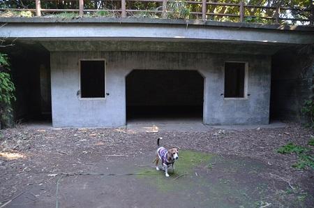 20170126大房岬自然公園32