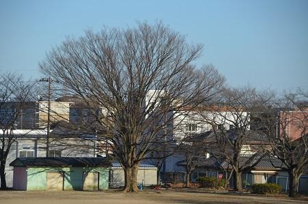 20170131戸頭西小学校12