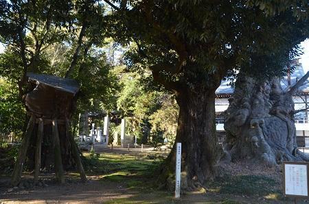 20170131地蔵ケヤキ16