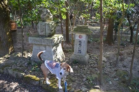 0170206五所駒瀧神社14
