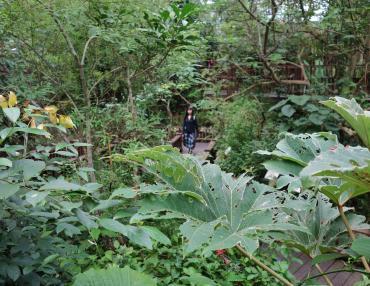 ジャングル大帝