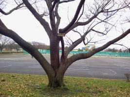 koen-12gatu-kawagoe2.jpg