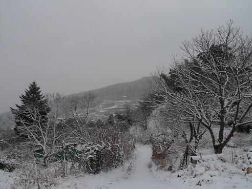 2017,1月高原2