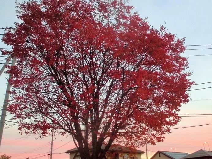 16.11.10 朝焼け、障害児の絵、山桜紅葉  (30)