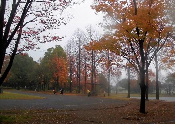 16.11.15 三橋公園の紅葉とラジオ体操 (7)