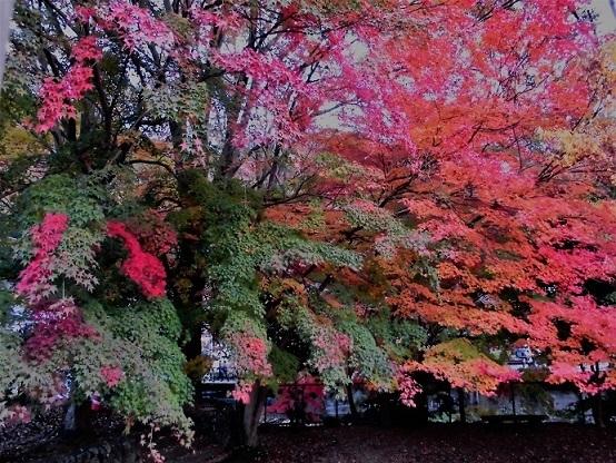 16.11.17ハイク 景信山~高尾山 (104)
