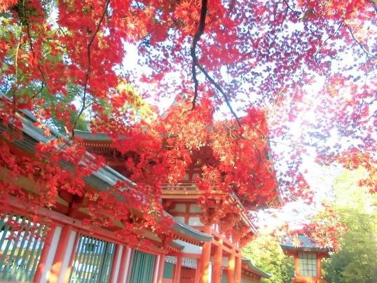 16.11.22 当番・大宮図書館。氷川神社 (48)