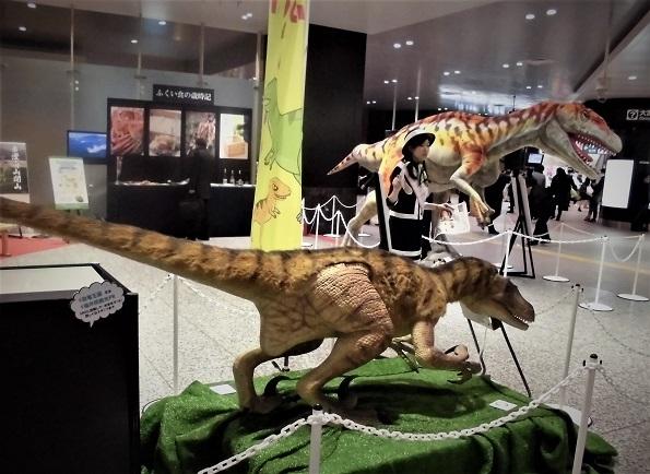17.1.17 福井県恐竜PR (9)