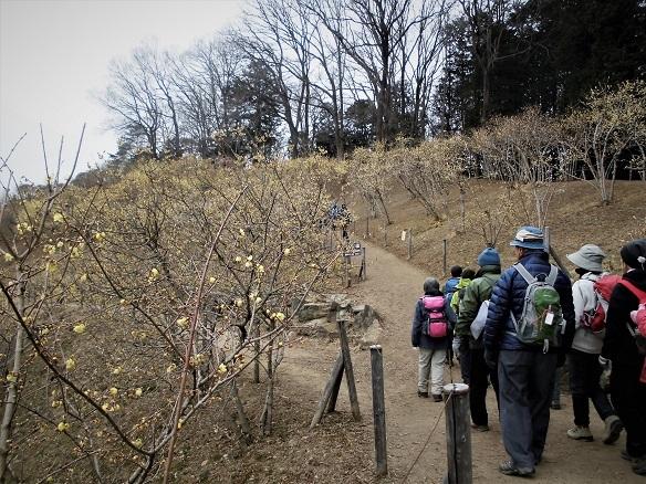 17.2.5ハイク宝昇山 (37)