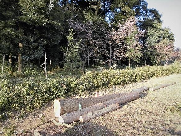 7 17.29 ママチャリング(鴨川下り) (154)