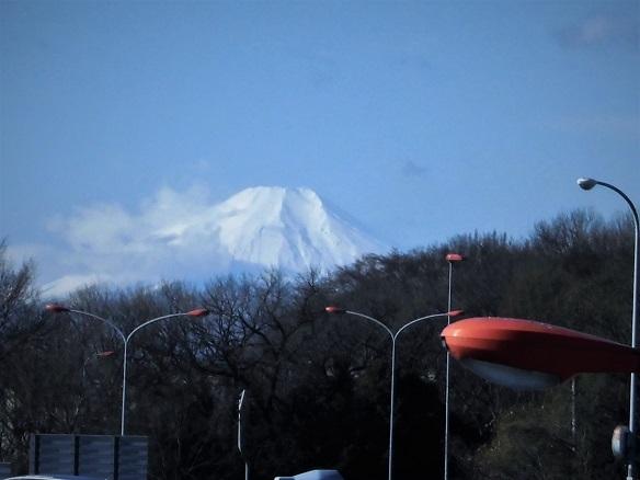 17.2.10 散歩・高木の剪定 (11)