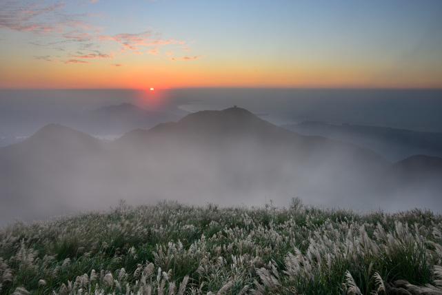 霧とススキ(4)