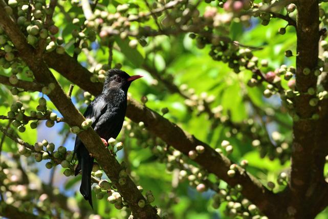 野鳥の饗宴(4)