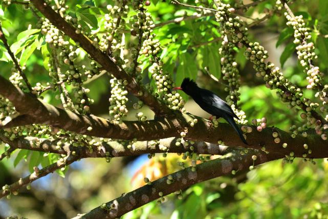 野鳥の饗宴(3)