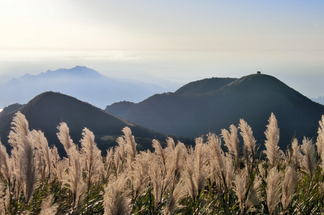 山頂のススキ(2)
