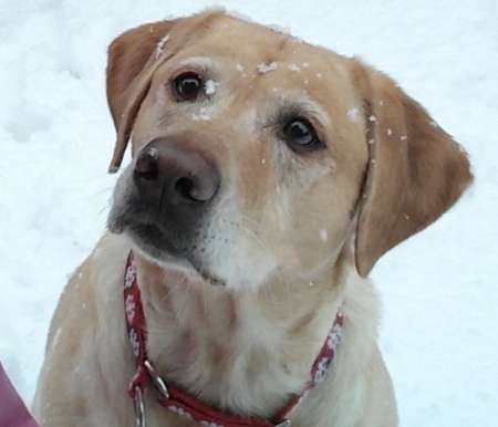 Elli with snow