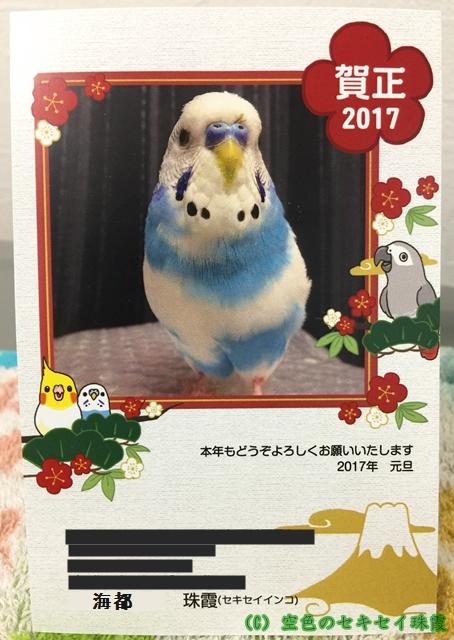 2017年あけましておめでとうございます。 年賀状  空色のセキセイ珠霞