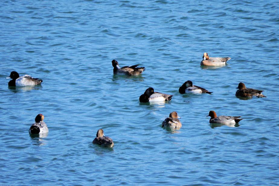 港内の水鳥