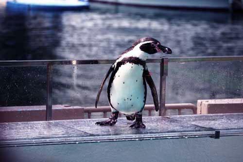 ペンギン歩き20
